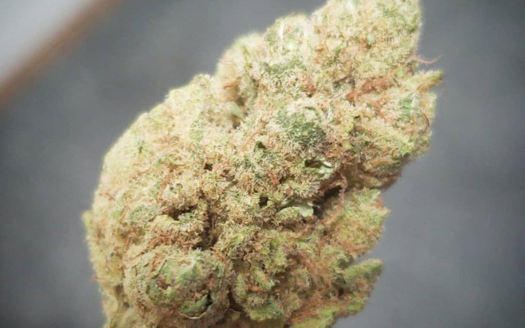 Strain of the week: Tangie! Great daytime fruity sativa with citrus flavors and a blue dreamy feel. What u smokin this week?